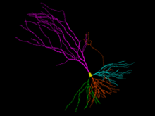 The new neuron reconstruction and analysis station now available!